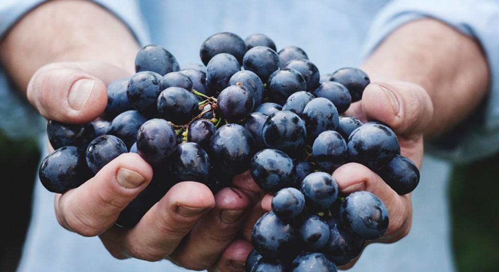 raisins-mains