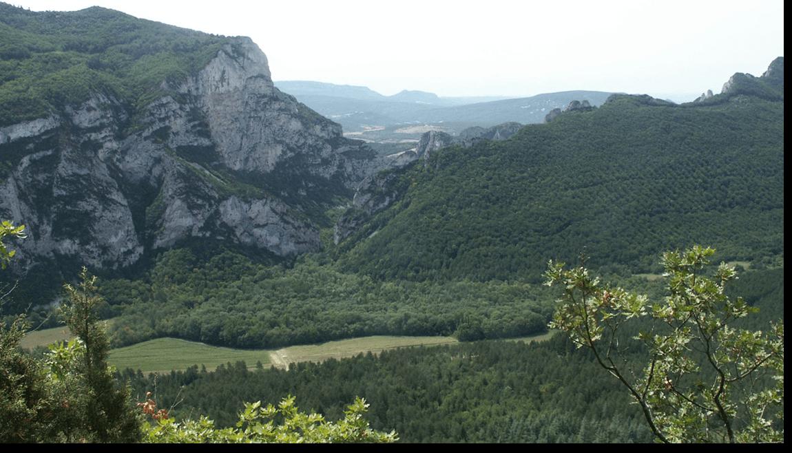 forêt-de-saoûl