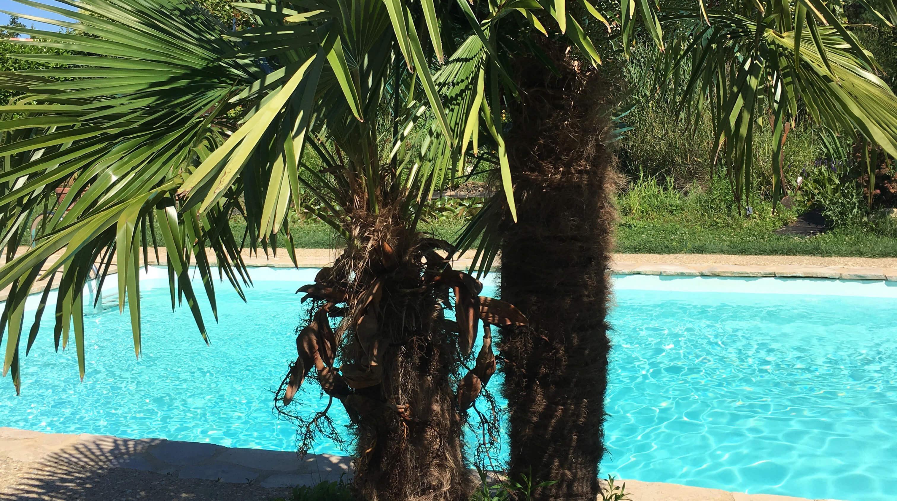 palmiers piscine fl